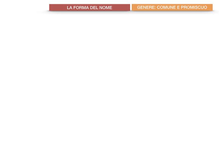 7.1.GRAMMATICA_NOMI_FORMA_GENERE_SIMULAZIONE.045