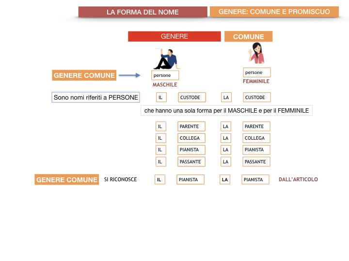 7.1.GRAMMATICA_NOMI_FORMA_GENERE_SIMULAZIONE.060