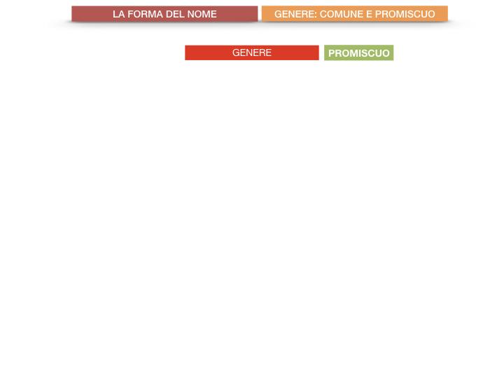 7.1.GRAMMATICA_NOMI_FORMA_GENERE_SIMULAZIONE.071