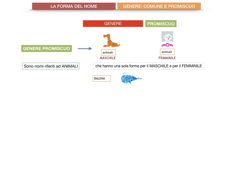 7.1.GRAMMATICA_NOMI_FORMA_GENERE_SIMULAZIONE.077