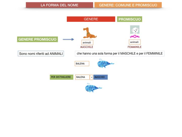 7.1.GRAMMATICA_NOMI_FORMA_GENERE_SIMULAZIONE.078