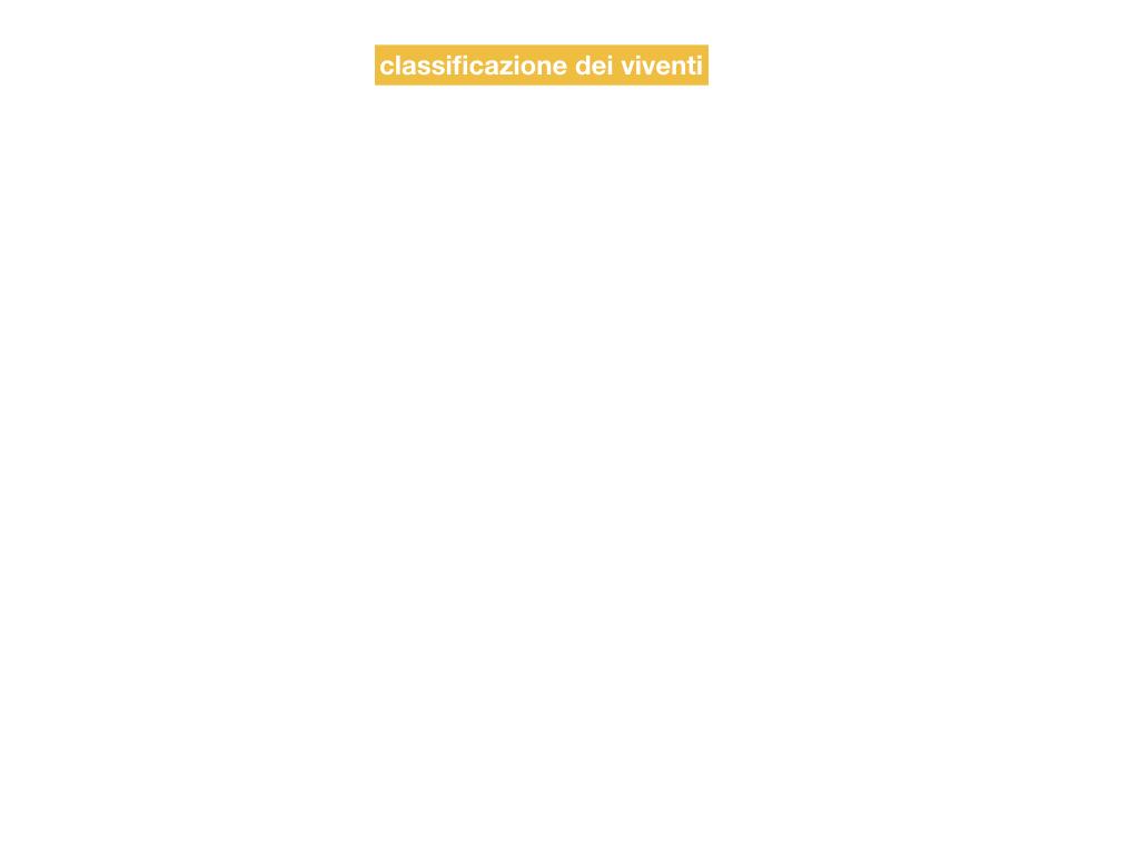 classificazione_viventi_SIMULAZIONE.002