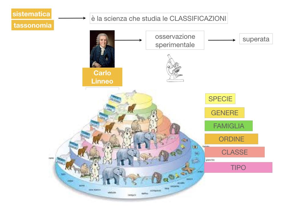 classificazione_viventi_SIMULAZIONE.030
