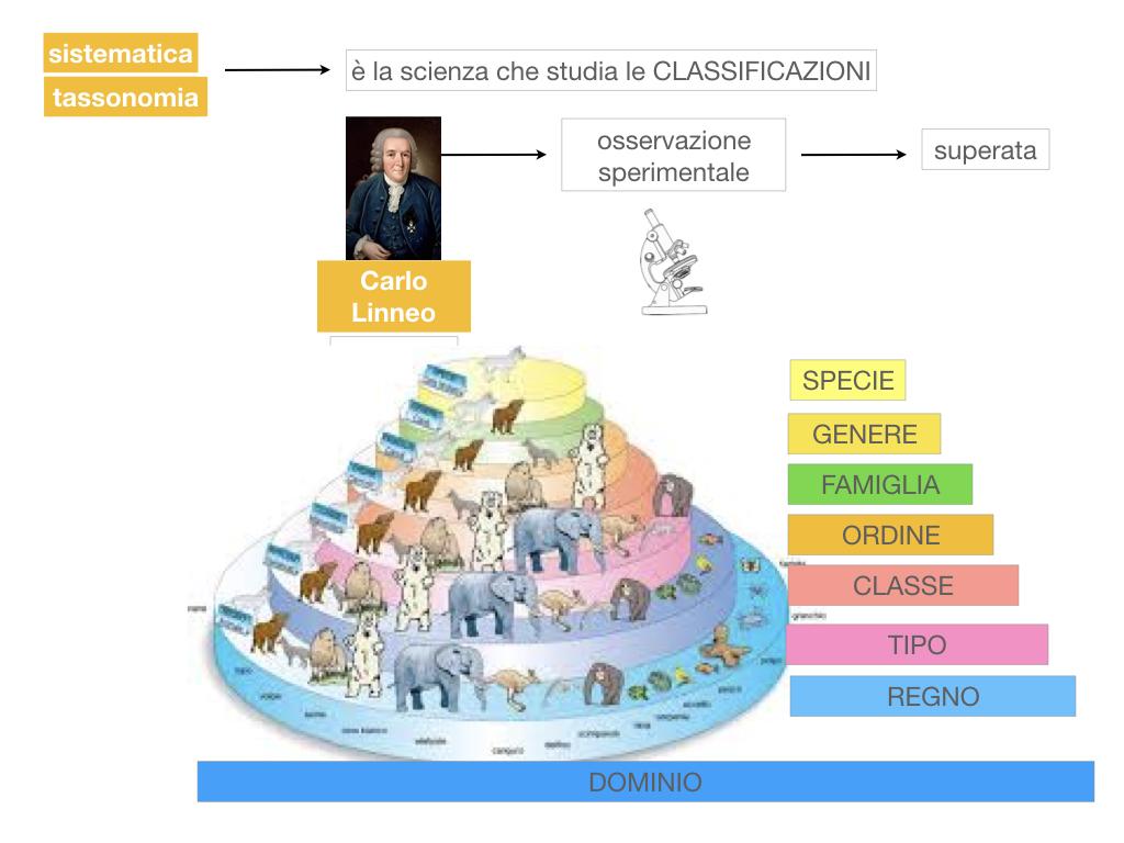 classificazione_viventi_SIMULAZIONE.032