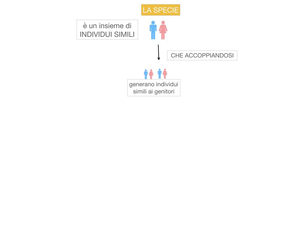 classificazione_viventi_SIMULAZIONE.036
