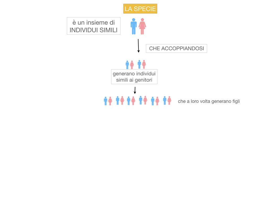 classificazione_viventi_SIMULAZIONE.037