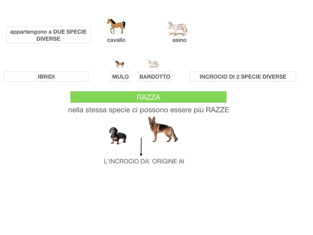classificazione_viventi_SIMULAZIONE.061