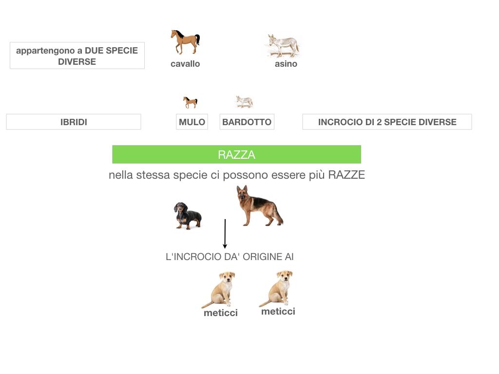 classificazione_viventi_SIMULAZIONE.062