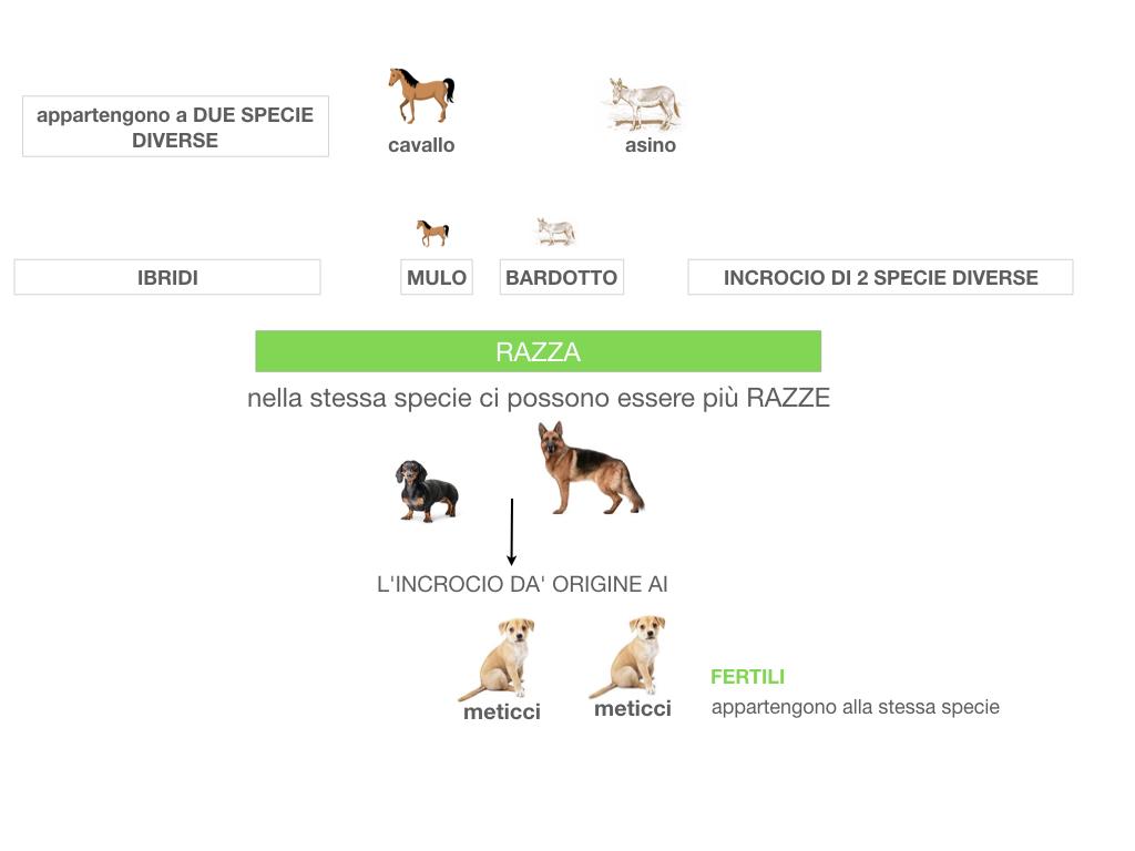 classificazione_viventi_SIMULAZIONE.064