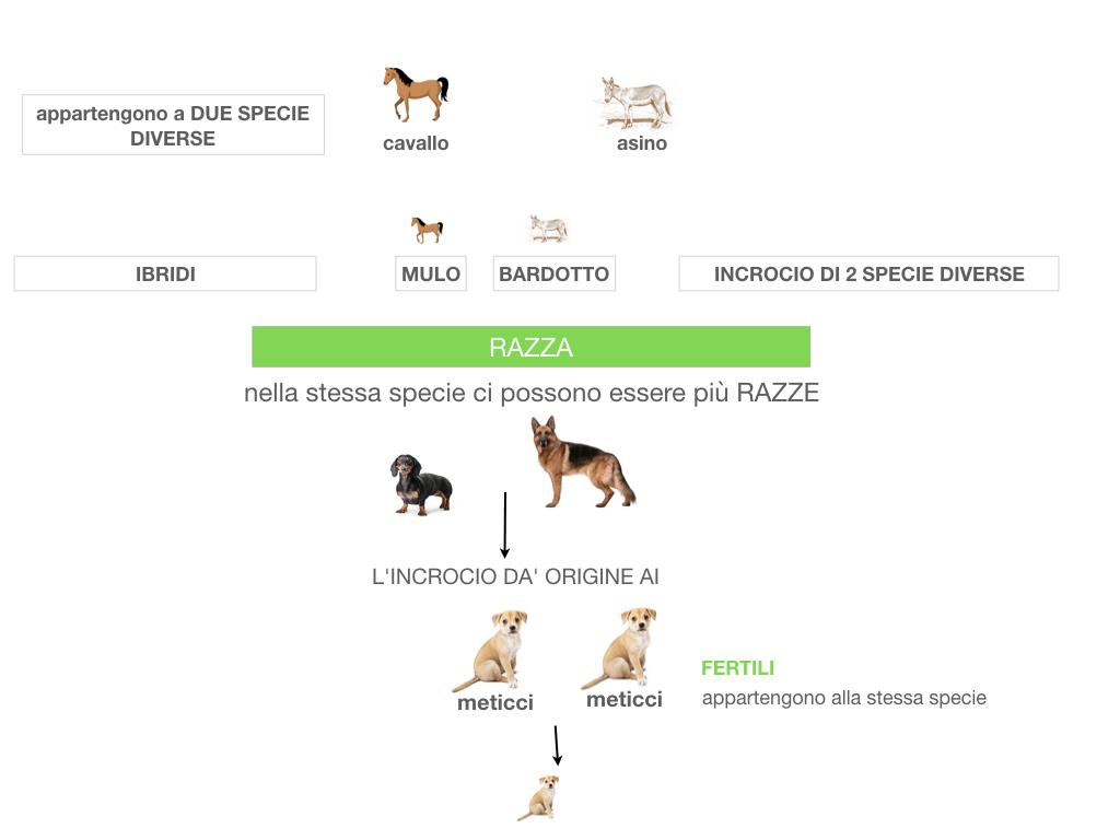 classificazione_viventi_SIMULAZIONE.065