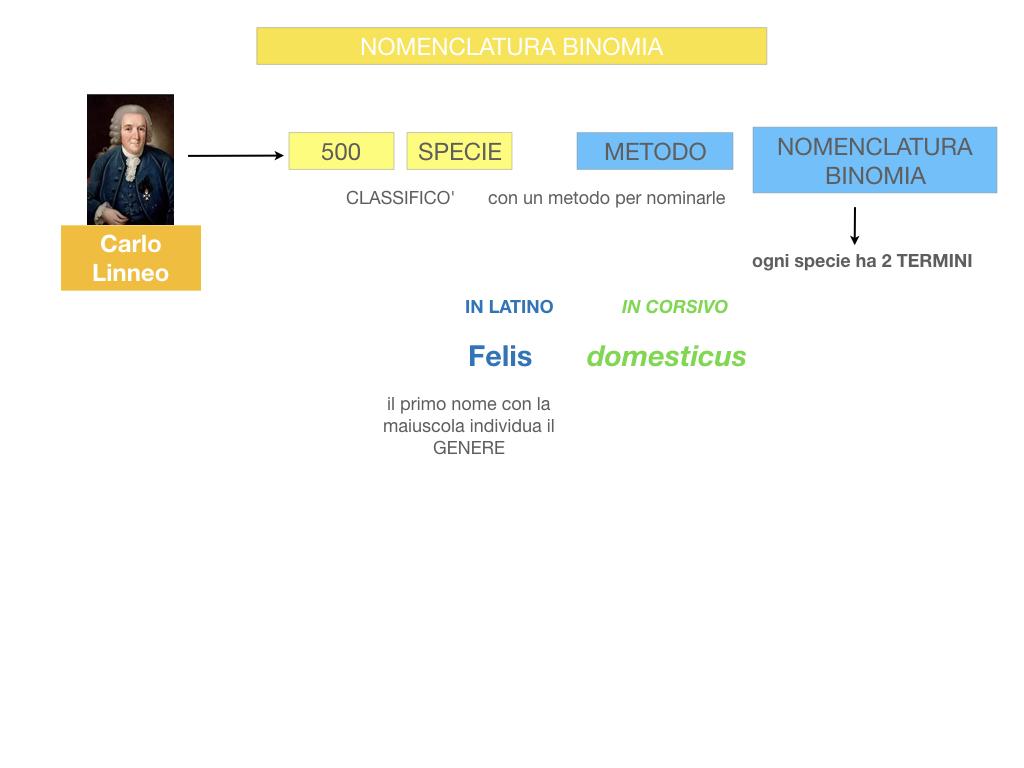 classificazione_viventi_SIMULAZIONE.076