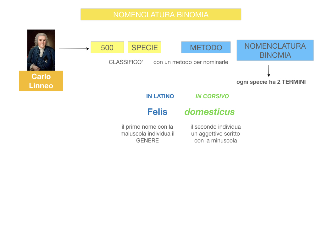 classificazione_viventi_SIMULAZIONE.077
