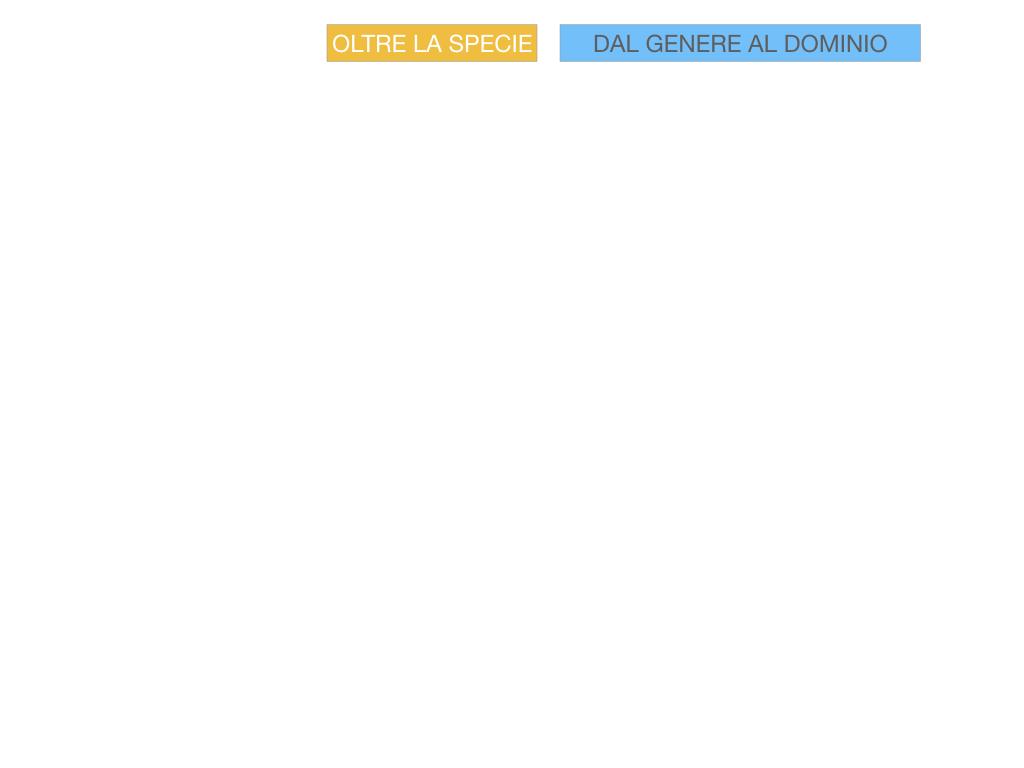 classificazione_viventi_SIMULAZIONE.097