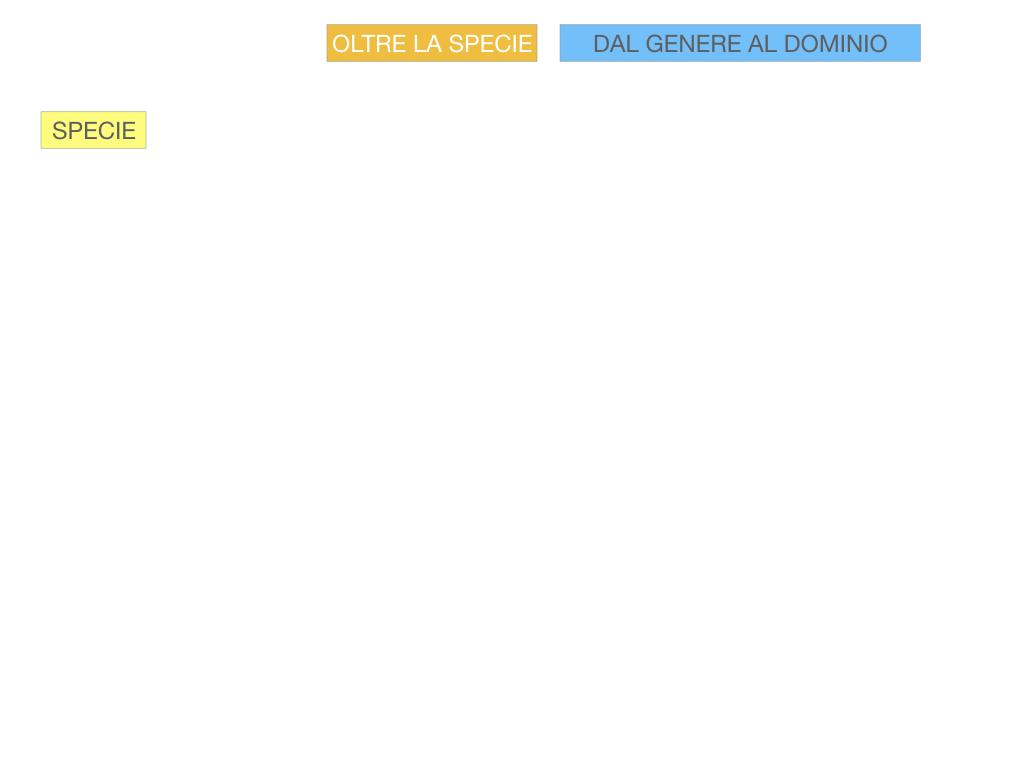 classificazione_viventi_SIMULAZIONE.098