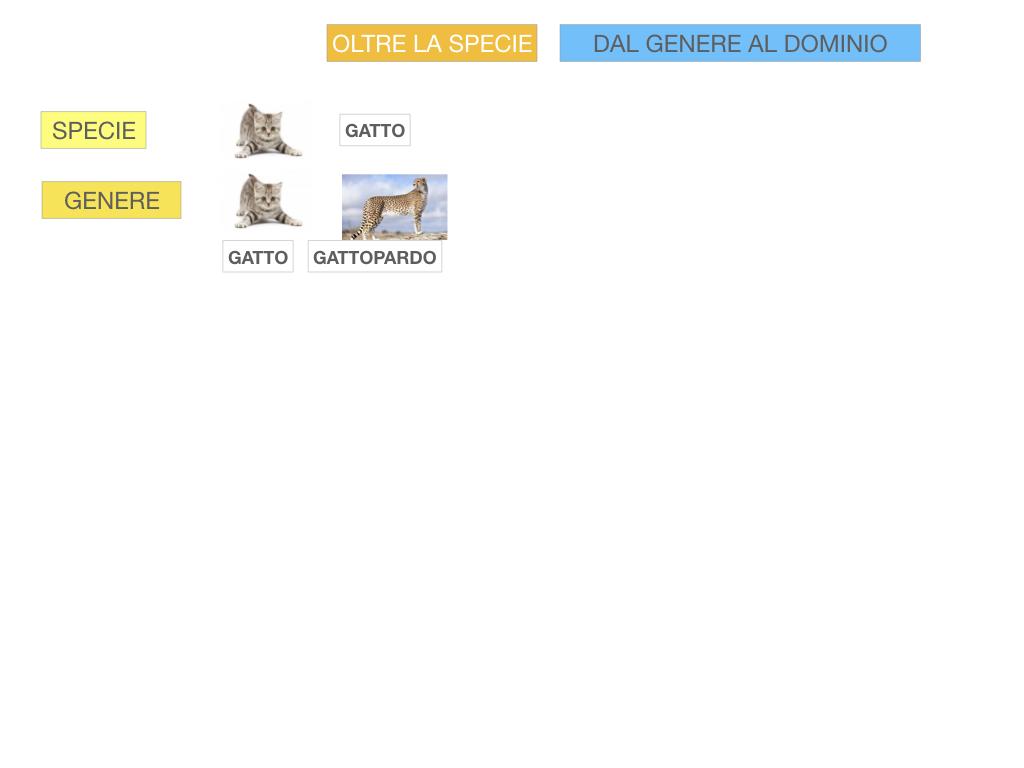 classificazione_viventi_SIMULAZIONE.102