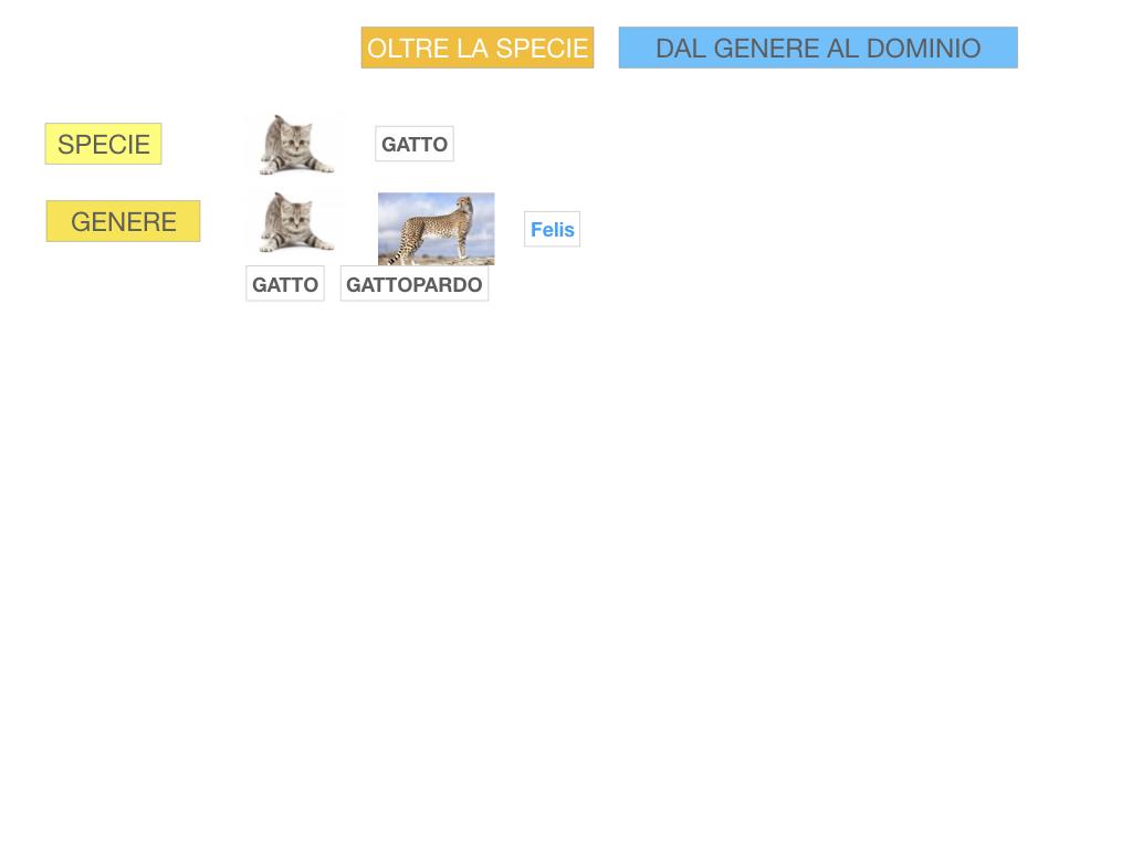 classificazione_viventi_SIMULAZIONE.103