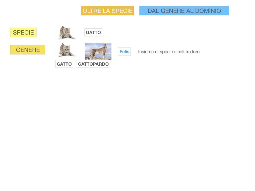 classificazione_viventi_SIMULAZIONE.104