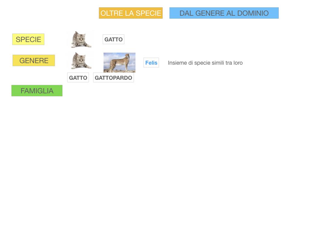 classificazione_viventi_SIMULAZIONE.105