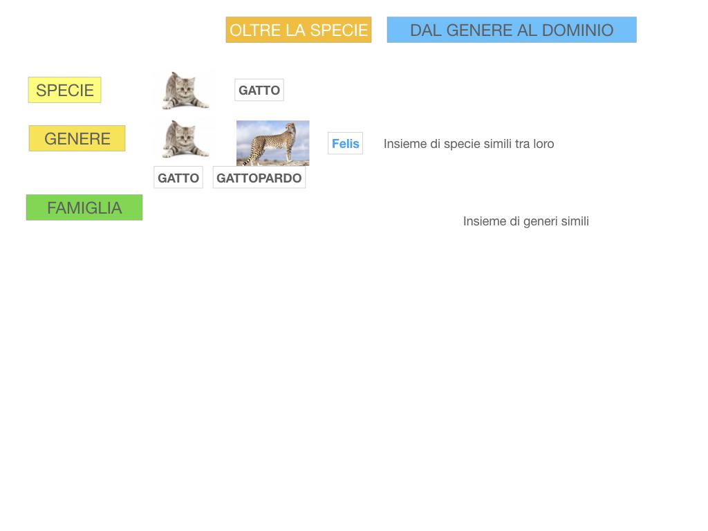classificazione_viventi_SIMULAZIONE.106