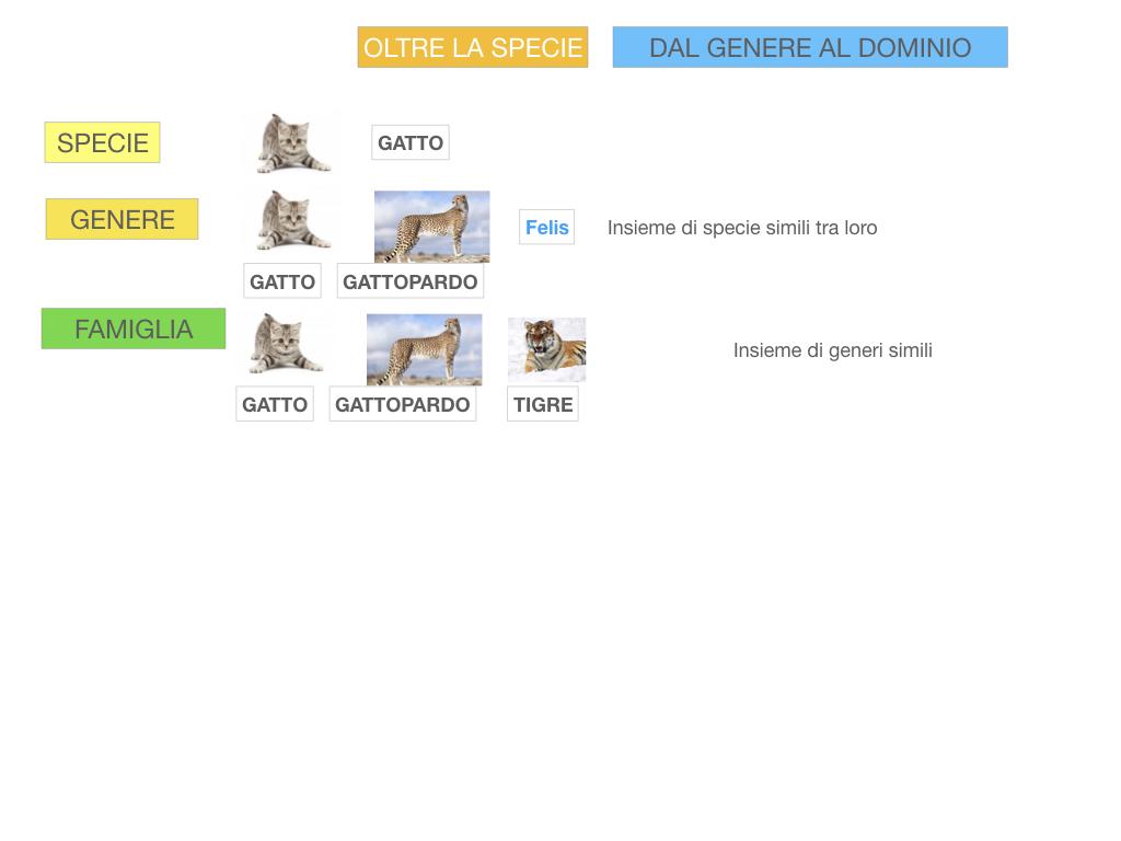 classificazione_viventi_SIMULAZIONE.108