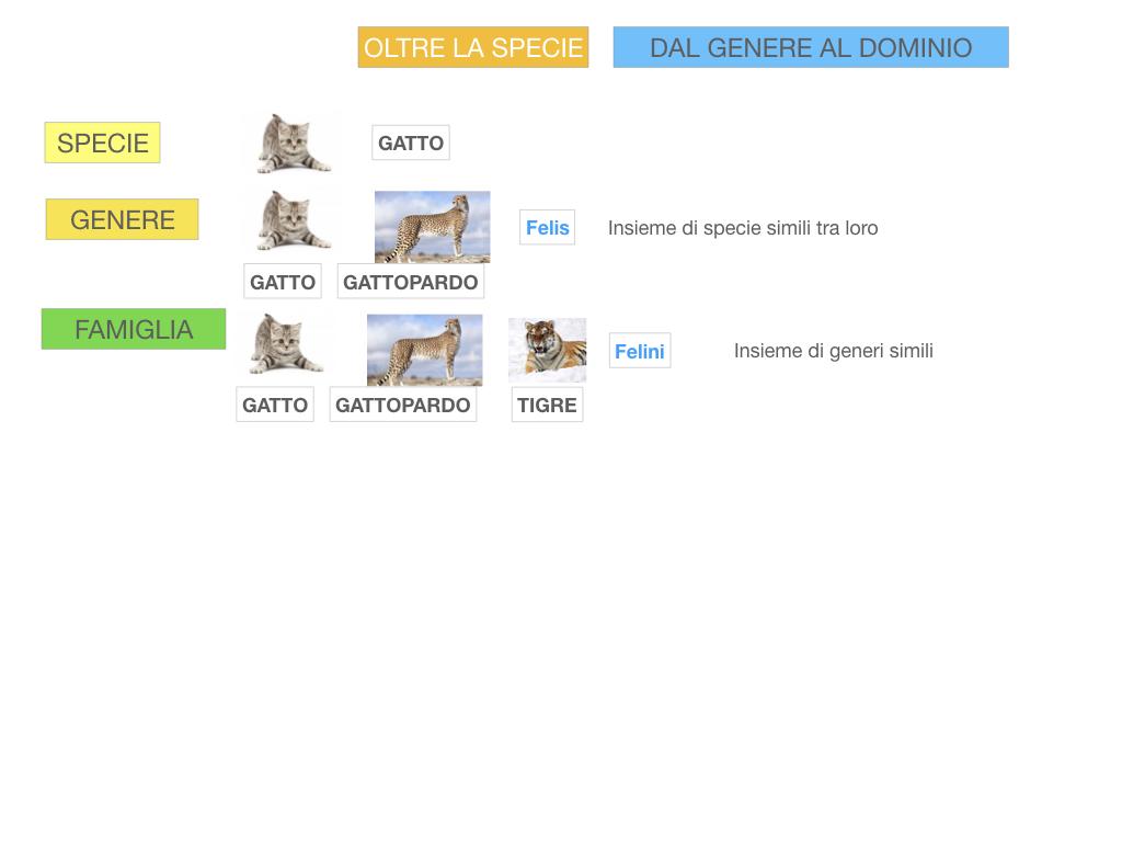 classificazione_viventi_SIMULAZIONE.109