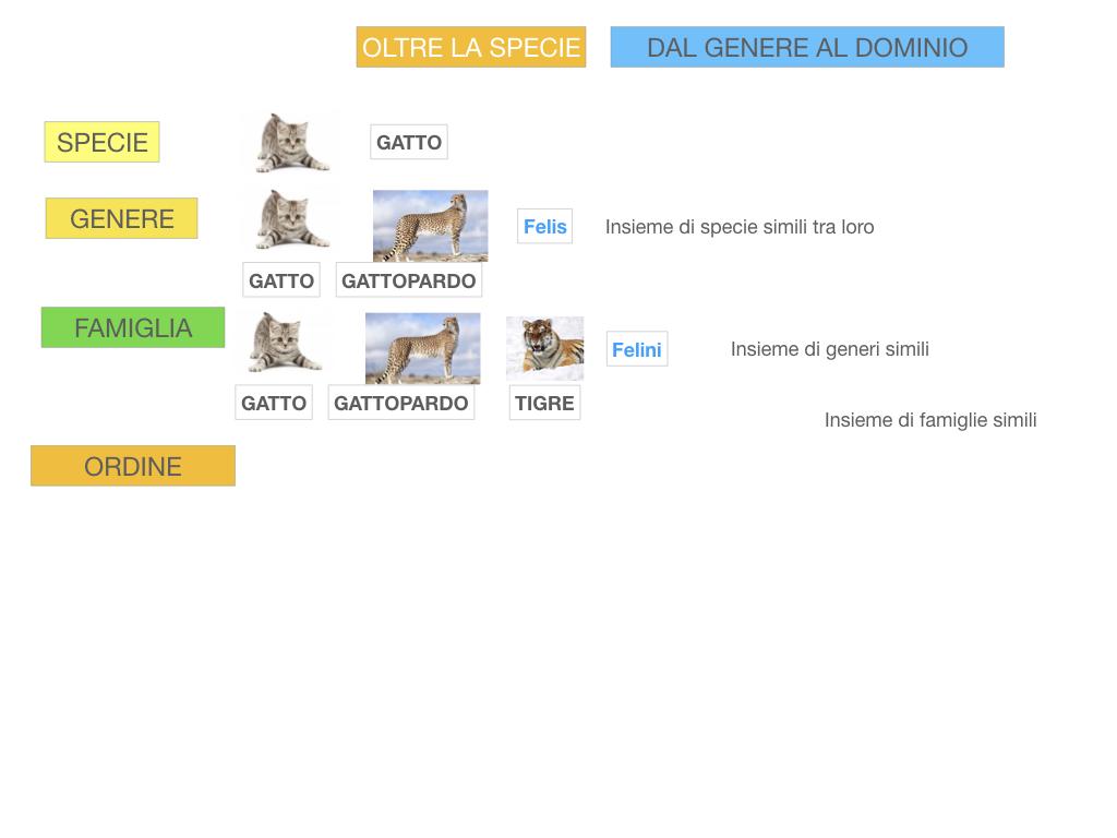classificazione_viventi_SIMULAZIONE.110