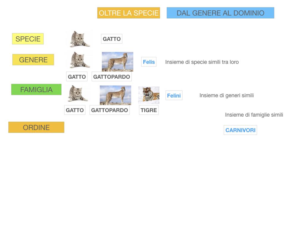 classificazione_viventi_SIMULAZIONE.111