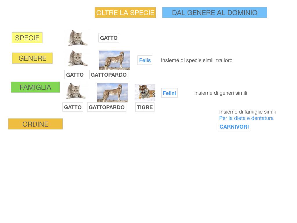 classificazione_viventi_SIMULAZIONE.112