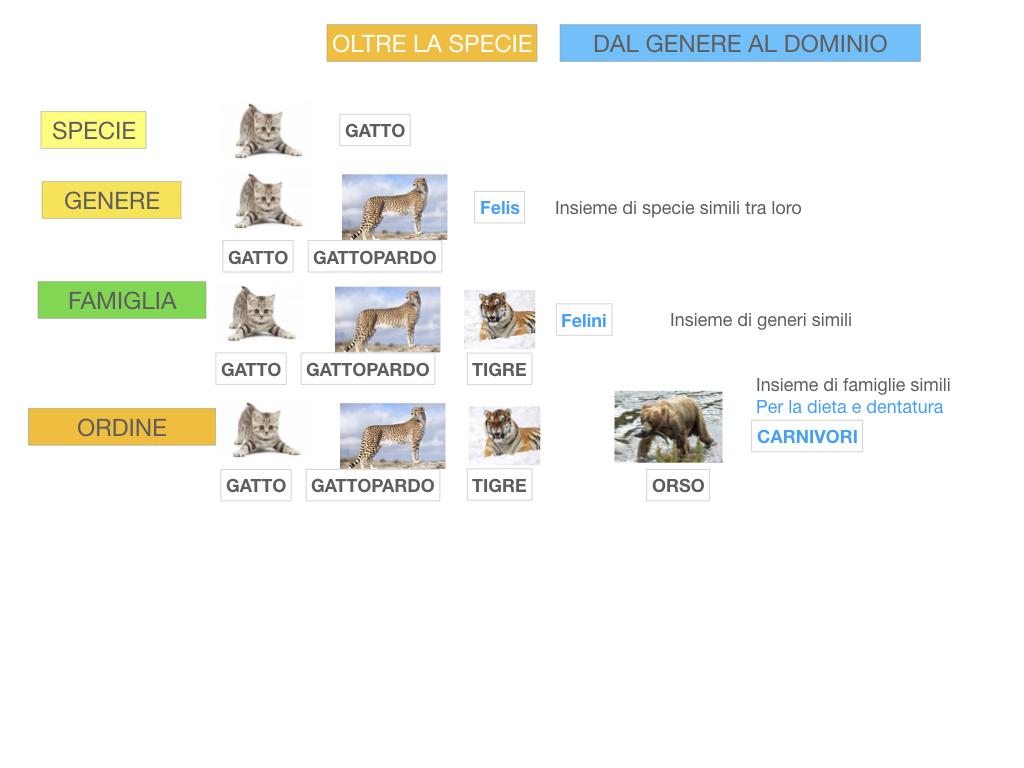 classificazione_viventi_SIMULAZIONE.113