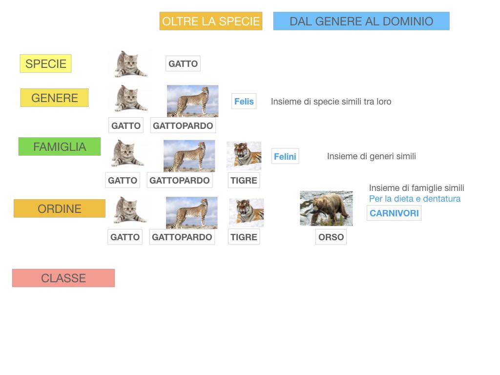 classificazione_viventi_SIMULAZIONE.114