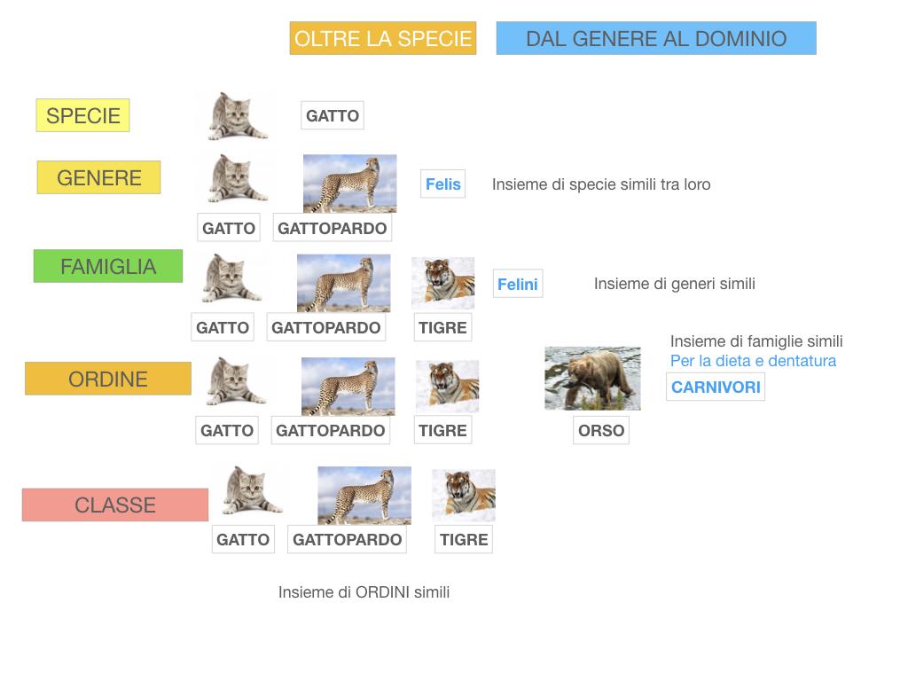 classificazione_viventi_SIMULAZIONE.116