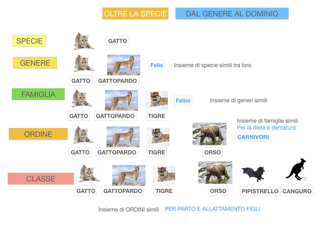 classificazione_viventi_SIMULAZIONE.118