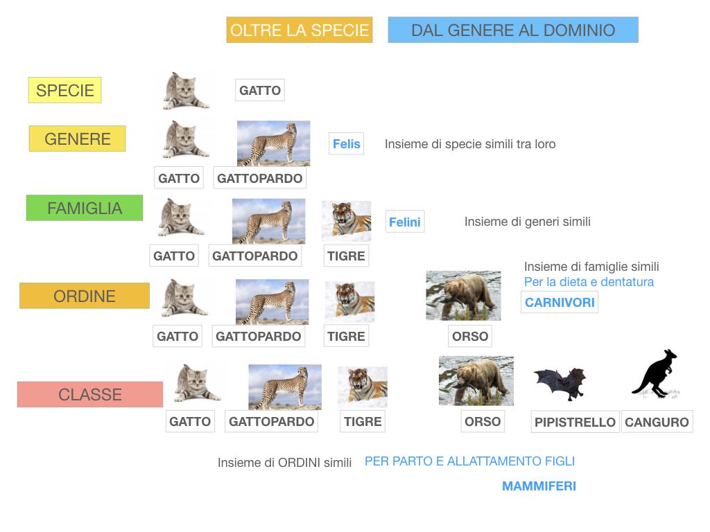classificazione_viventi_SIMULAZIONE.119