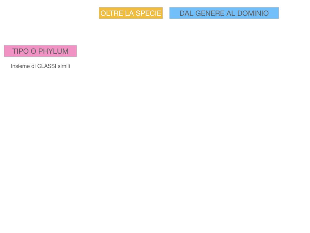 classificazione_viventi_SIMULAZIONE.122