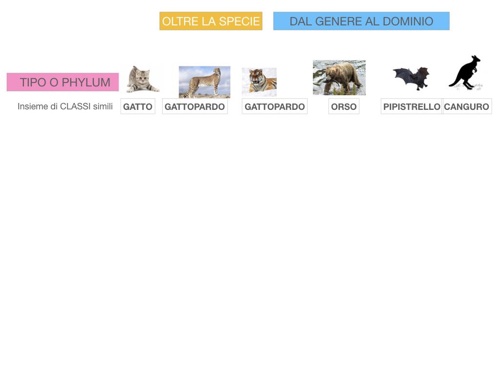 classificazione_viventi_SIMULAZIONE.123