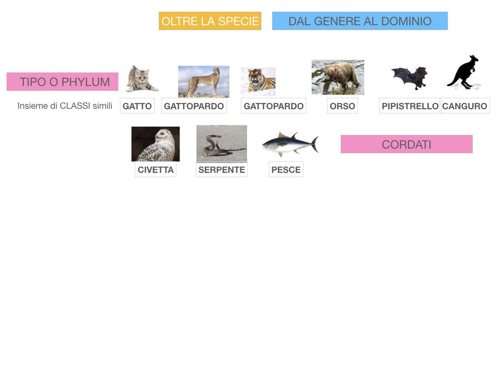 classificazione_viventi_SIMULAZIONE.125