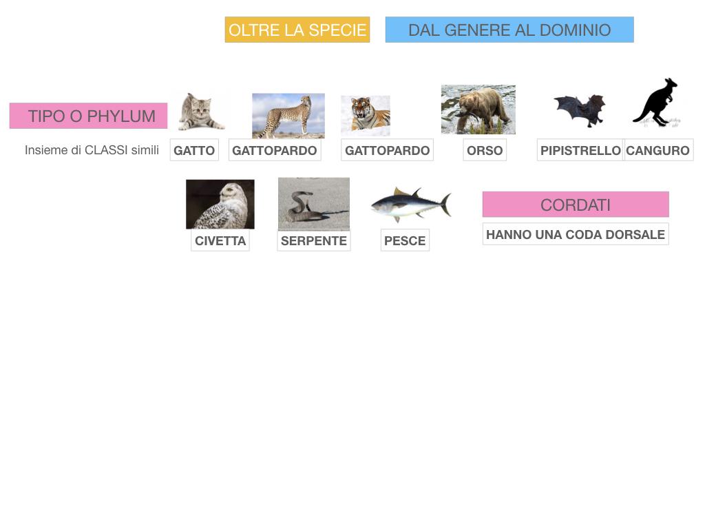 classificazione_viventi_SIMULAZIONE.126