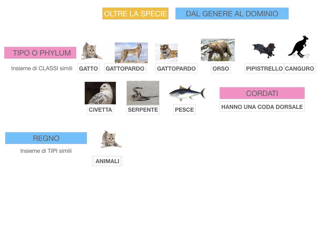 classificazione_viventi_SIMULAZIONE.129