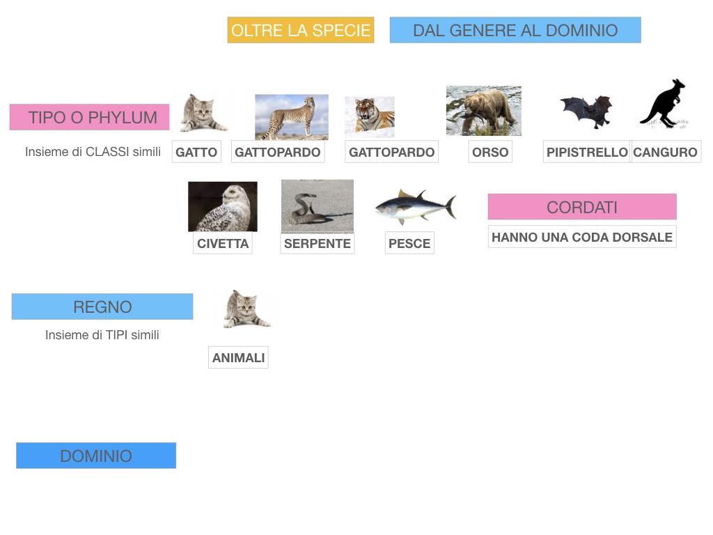 classificazione_viventi_SIMULAZIONE.130