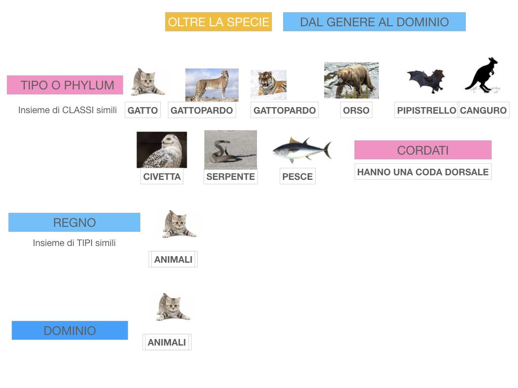 classificazione_viventi_SIMULAZIONE.131