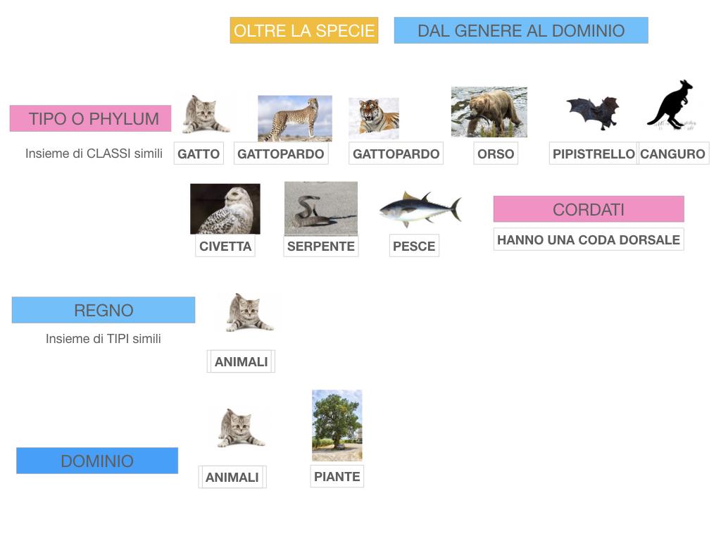 classificazione_viventi_SIMULAZIONE.132