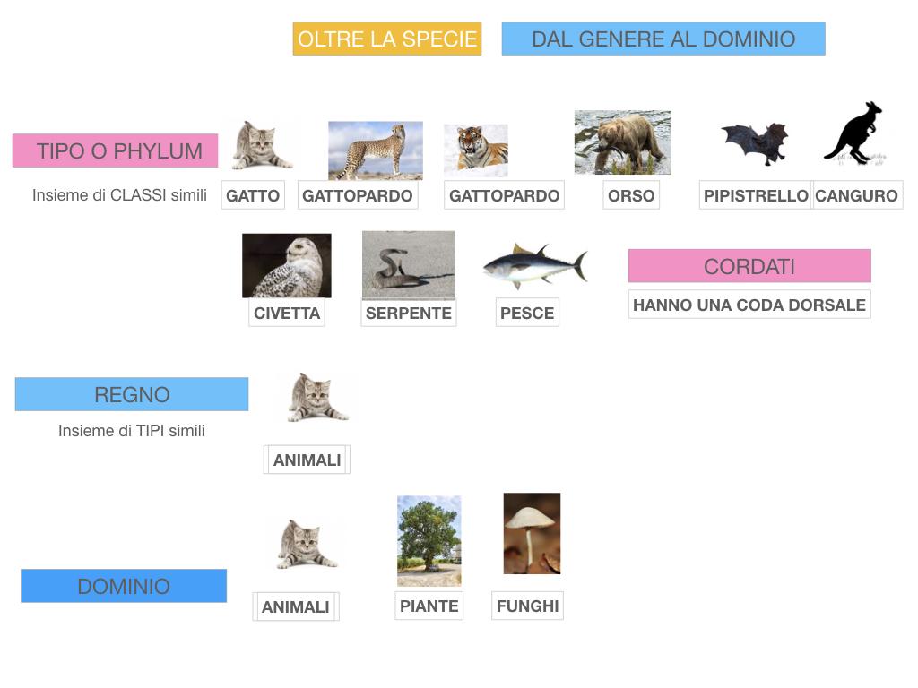 classificazione_viventi_SIMULAZIONE.133