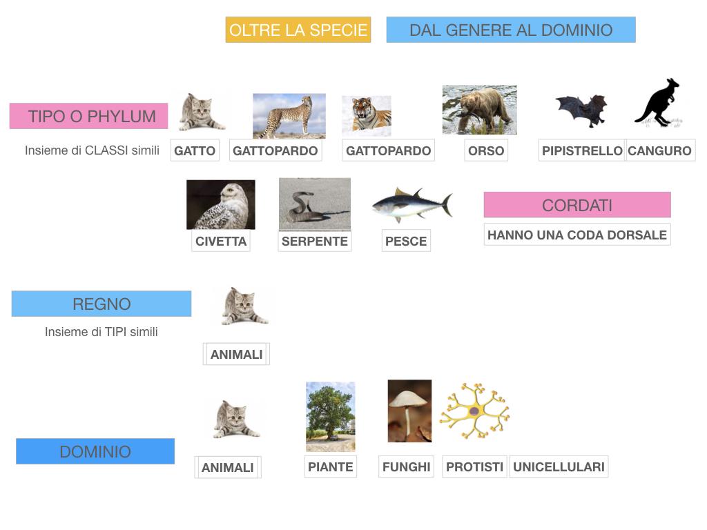 classificazione_viventi_SIMULAZIONE.134