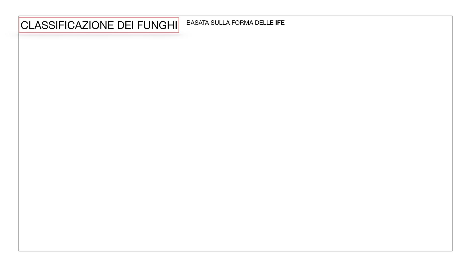 10. i funghi_SIMULAZIONE PARTE2.002
