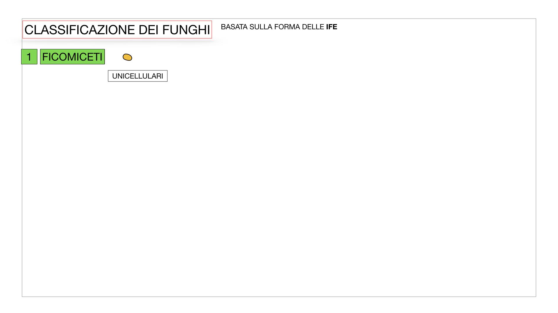 10. i funghi_SIMULAZIONE PARTE2.004