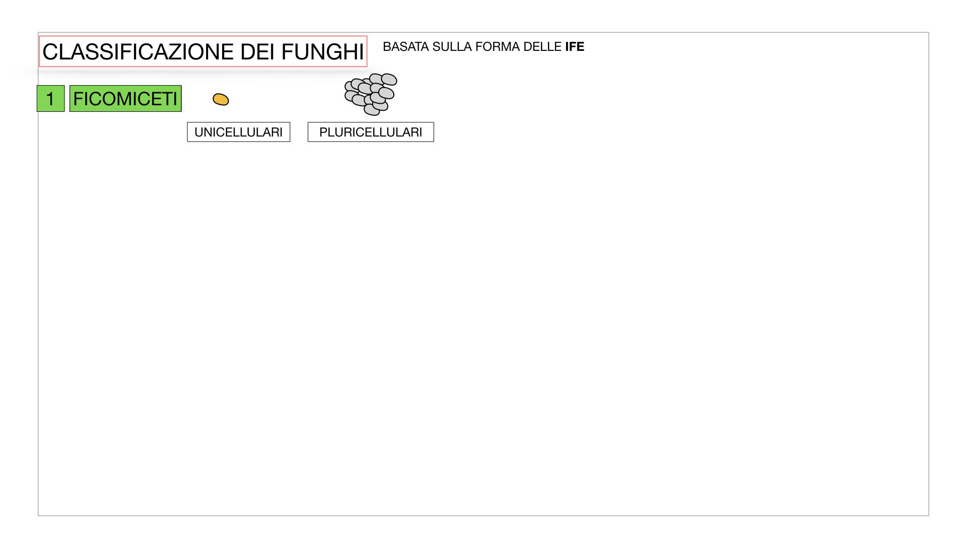 10. i funghi_SIMULAZIONE PARTE2.005