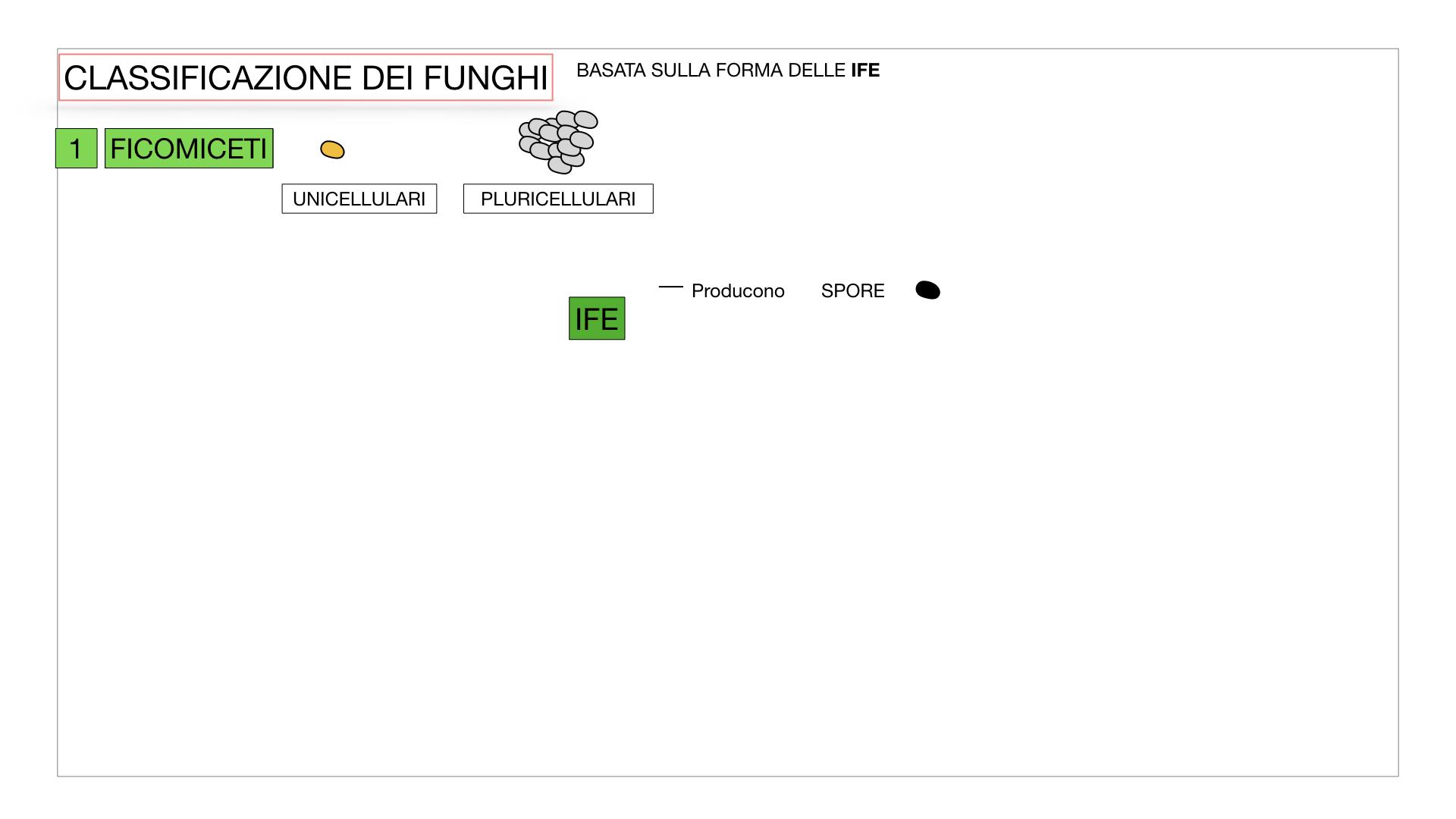 10. i funghi_SIMULAZIONE PARTE2.006