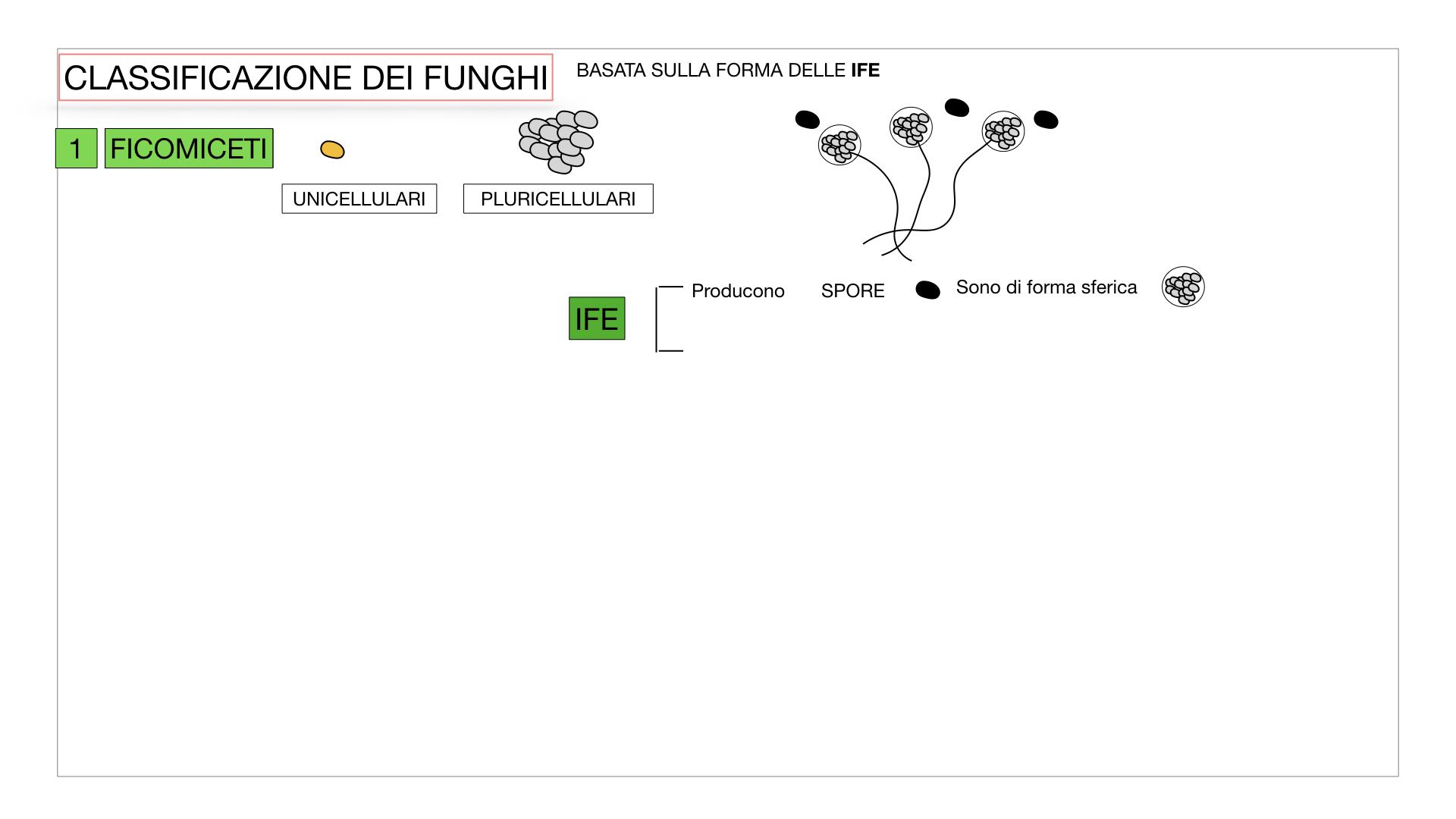 10. i funghi_SIMULAZIONE PARTE2.008