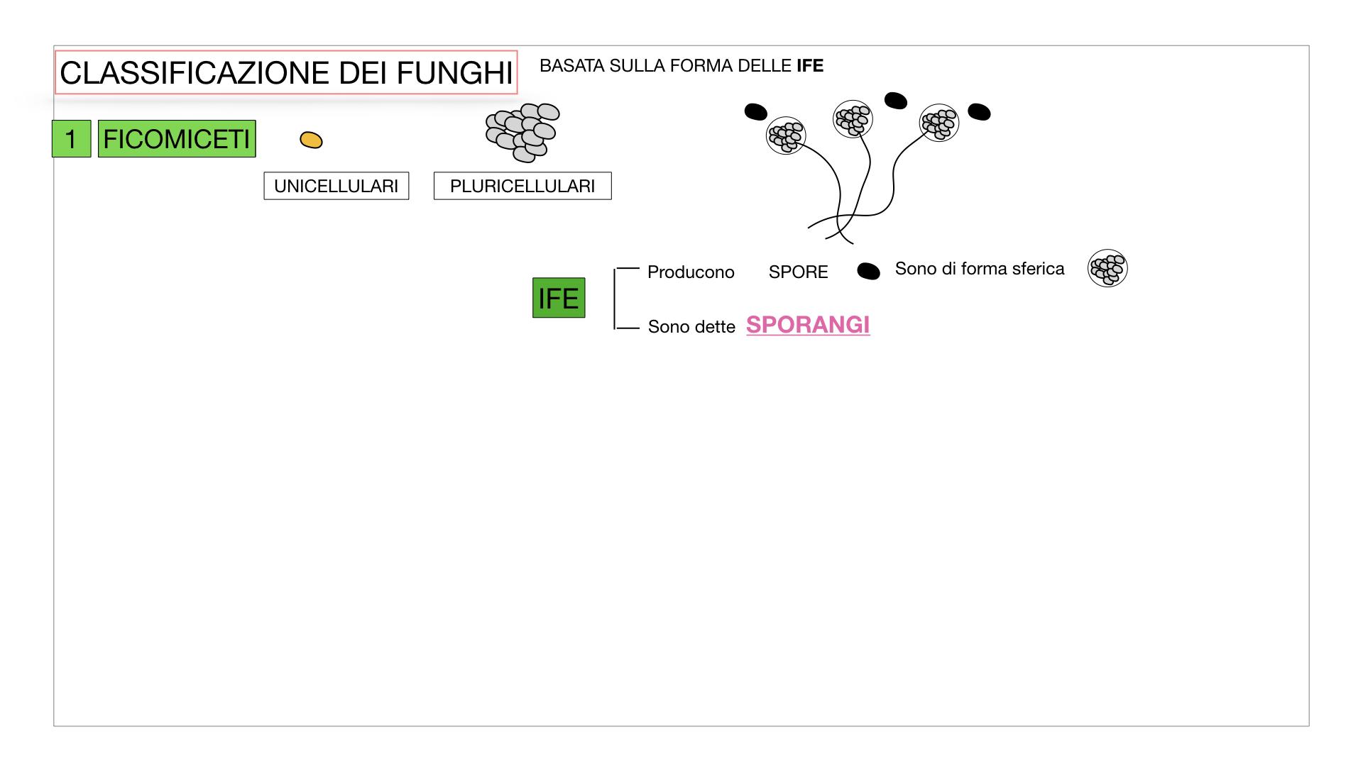 10. i funghi_SIMULAZIONE PARTE2.009