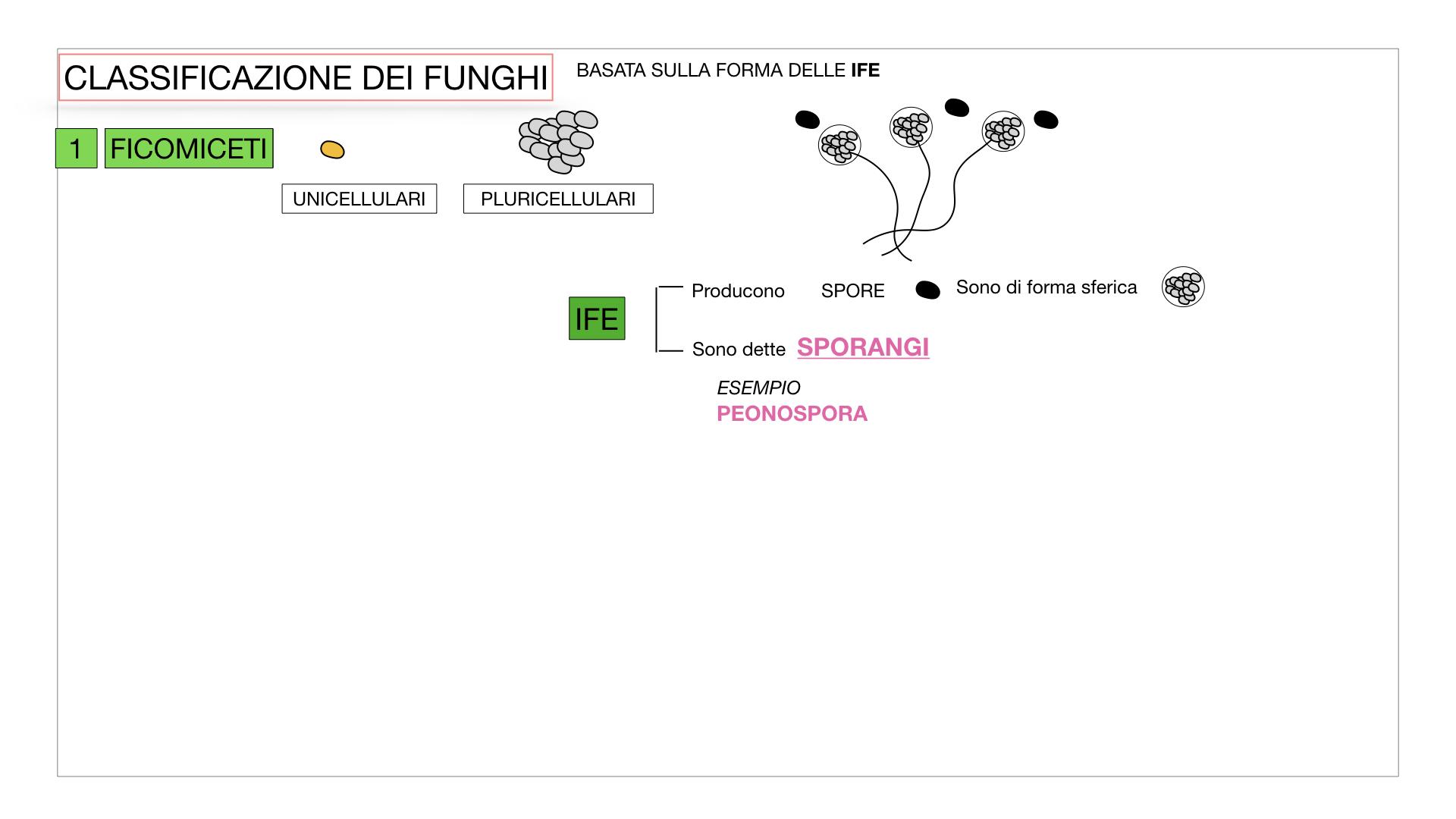 10. i funghi_SIMULAZIONE PARTE2.010